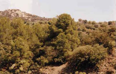 diversificacion rubiano: Bosque Mediterraneo