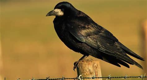 Do que se alimentam os pássaros da...   Perguntas Triviais ...