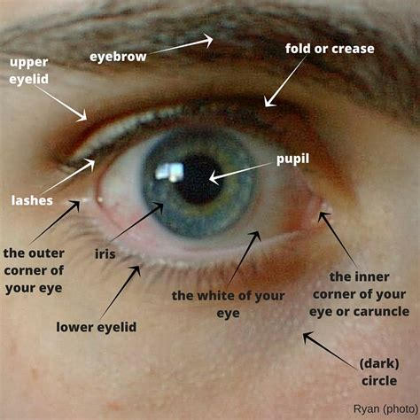 Do You Know the Parts of the Eye? – Vocabulary – English ...