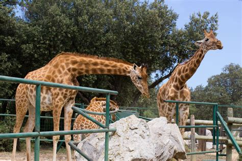 Do Zoos Do More Harm Than Good? Here are the Pros and Cons ...