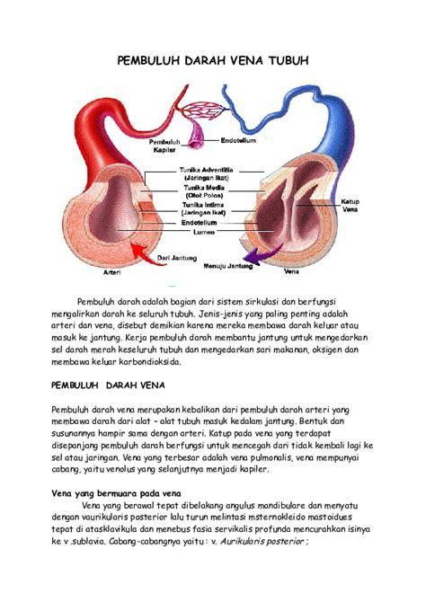 DOC  PEMBULUH DARAH VENA TUBUH.docx   Aksan Hamzah ...