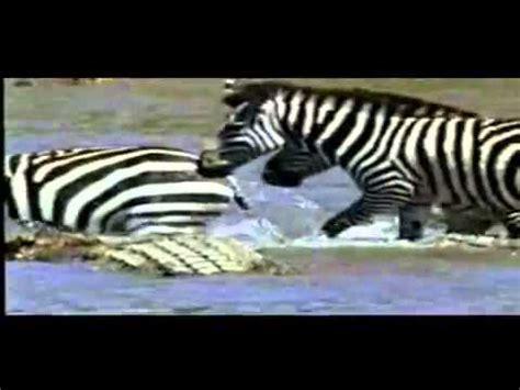 Documental National Geographic Dinosaurios en el rio el ...