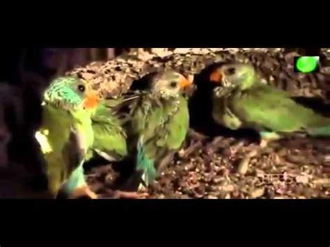 Documentales National Geographic Español Australia tierra ...