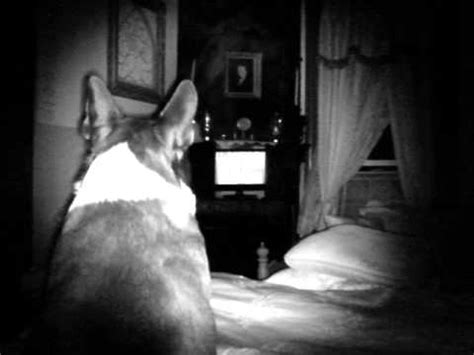 Dog see Spirits or something Paranormal, Ghost,Orbs ...