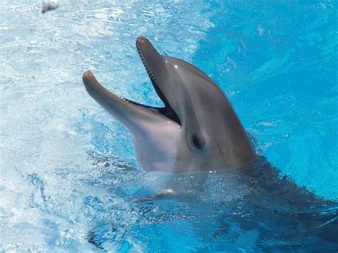 Dolphin  Bottlenose  | Selwo Marina Delfinarium