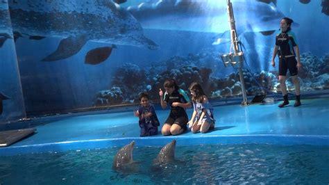 Dolphin Show at Barcelona Aquarium   YouTube