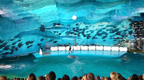 Dolphin show in Barcelona Zoo   YouTube