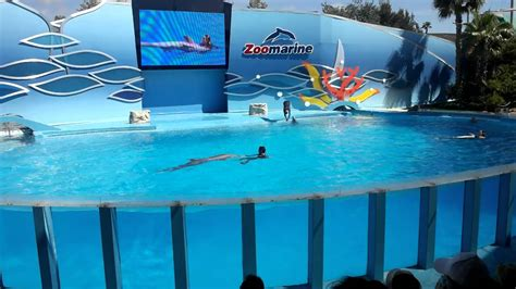 Dolphins Show Zoomarine Algarve Portugal   YouTube
