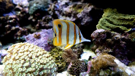 Don t Buy This: Why Tropical Fish Can Make Terrible Pets ...