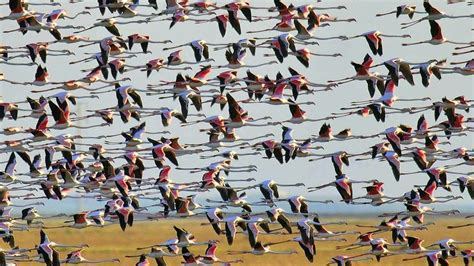 Doñana, humedal de las aves migratorias de África y de ...