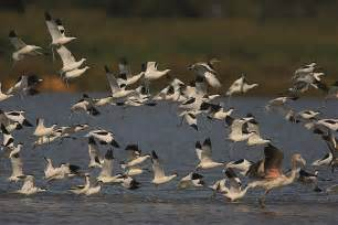Doñana, o Eldorado das Aves Migratórias, na Espanha