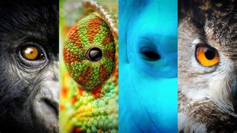 ¿Dónde está la diferencia entre los humanos y los animales ...