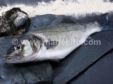 Dónde pescar lubinael_blog_del_mar%