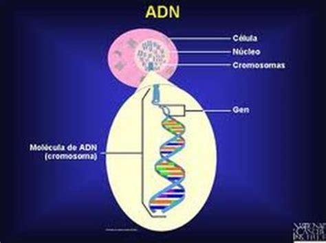 ¿ Donde podemos encontrar el ADN ?   El ADN