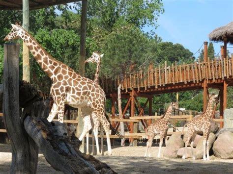 Dos empleados del Zoo de Madrid estafan 1M de € vendiendo ...