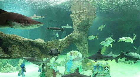 Dos nuevos ejemplares de tiburón gris se incorporan al ...