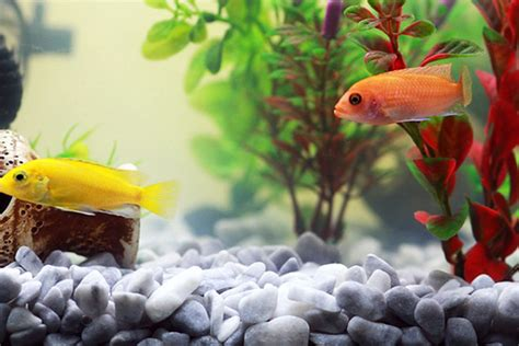 Do's and don'ts for buying tropical fish   Handbook ...