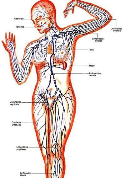 Drenaje linfático   Fisiolution