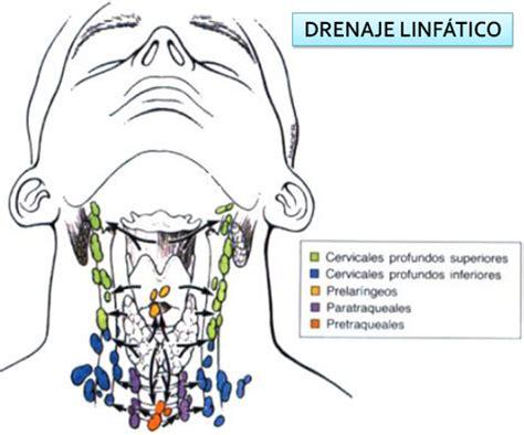 Drenaje linfático   Tiroides y Paratiroides  primera parte