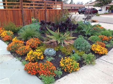 Drought Tolerant Plants Florida Zone 9 Flowering Full Sun ...