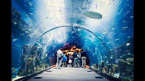 Dubai mall One of most impresive aquarium in the world ...