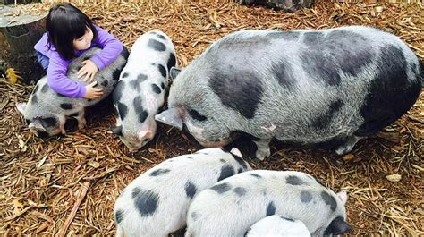 Duck, Duck, Donkey: 13 Farms and Petting Zoos for ...