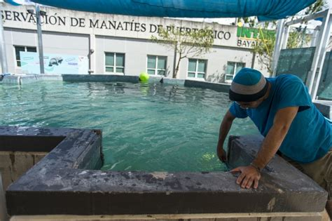 DVIDS   Images   Hurricane Maria: Manatee Conservation ...