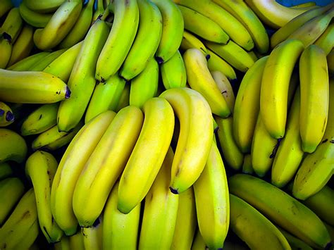 Dwarf Cavendish Banana Trees For Sale | The Tree Center
