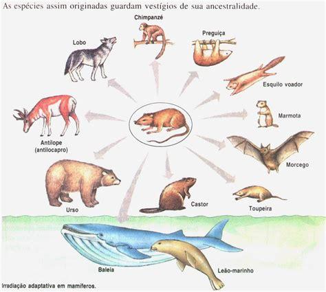 Ecología y Evolución: Evolución divergente