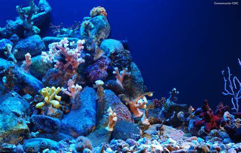 Ecosistema del fondo del mar amenazado.