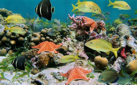 Ecosistemas: Qué son, por qué se caracterizan, tipos de ...