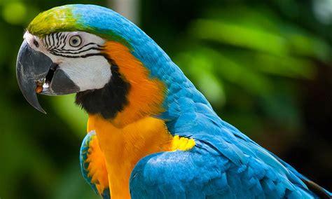 ECU aves exóticas: Especialización como cuidador de aves ...