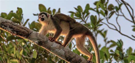 Ecuador Tours, Travel and Vacations   Nature Galapagos Ecuador