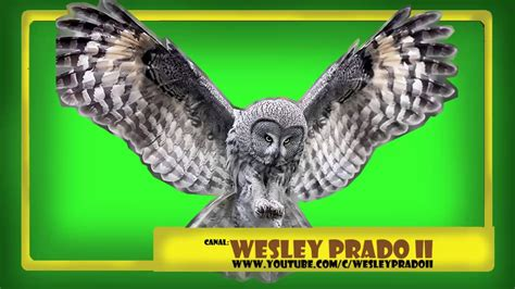 efeitos sonoros de coruja   Owl sound effects   YouTube