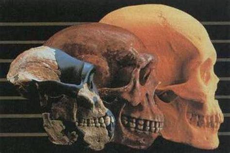 Eje cronológico: Evolución de los homínidos timeline ...