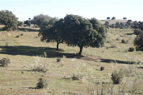 Ejemplares mediterráneos | Bosque mediterraneo, Bosque ...