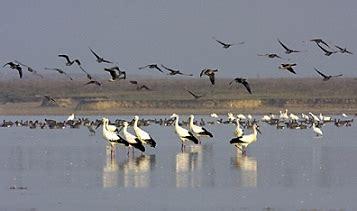 Ejemplos de aves migratorias   Modelos, muestras y ...