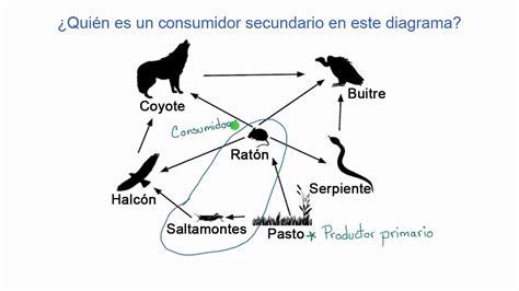 Ejemplos De Cadenas Alimenticias Y Redes Troficas ...