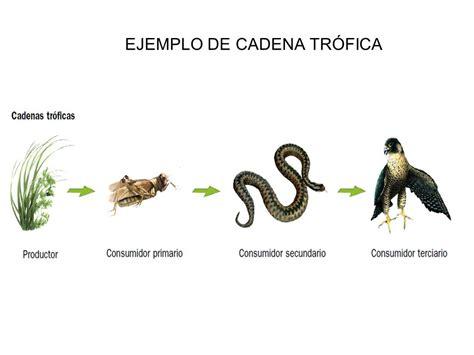 Ejemplos De Cadenas Y Redes Troficas   Colección de Ejemplo