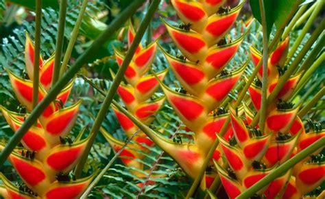 El 5 de Junio flores tropicales colombianas se exhibirán ...