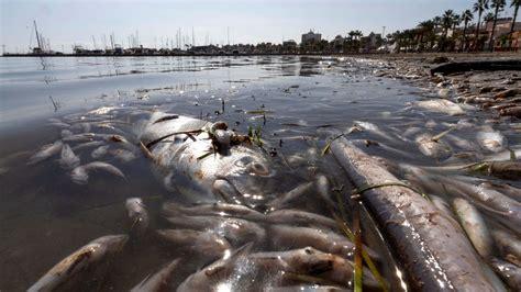 El 80 % de la flora y la fauna del Mar Menor ha muerto