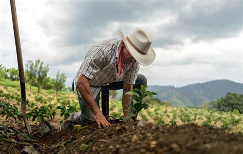 El agro, sector clave en la economía de Nicaragua   La Prensa