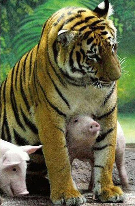 El año del 'Tigre' nace con el 2010: fortaleza y dominio ...