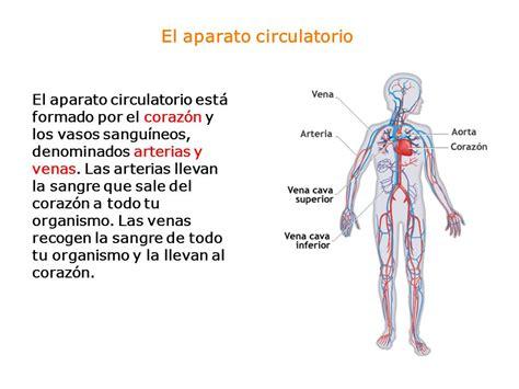 El aparato circulatorio   ppt video online descargar