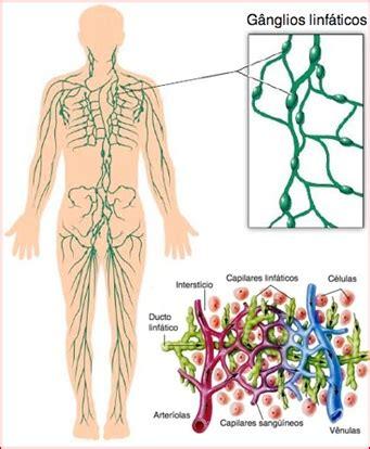El aparato circulatorio | Vivo en el Tercero  I