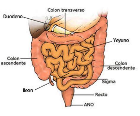 El aparato digestivo y sistema endocrino