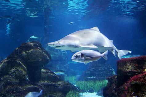 El Aquarium de Barcelona: tiburones, precios, horarios y ...