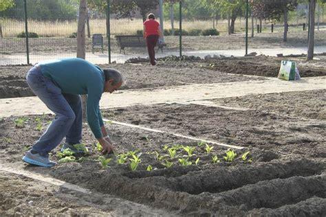 El Ayuntamiento pone 65 huertos urbanos de ocio a ...