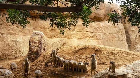 El Bioparc de València, Mejor Parque de Naturaleza del Año ...