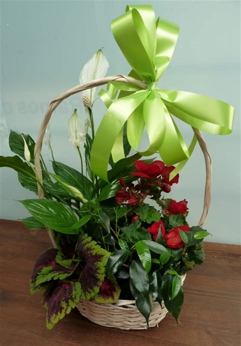 El Blog de Sieteflores, Quiosco de flores de la Plaza de ...